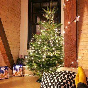 8ft to 9ft Real Christmas Tree